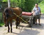 Trusty horse